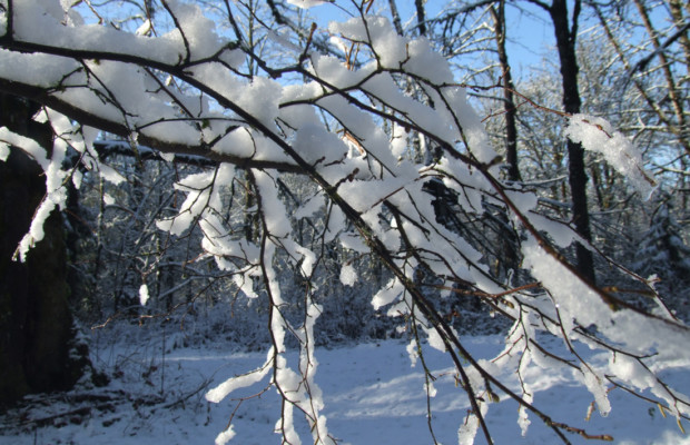Branches in the snow