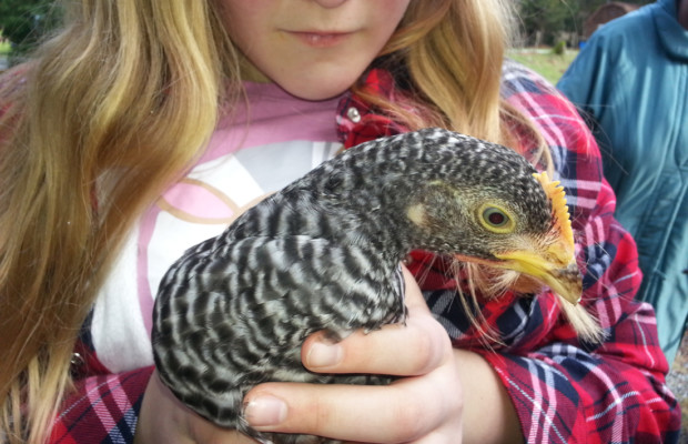 Young hen with child